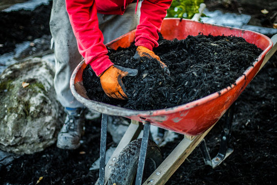 Man using his hands to take a load of wood chips inside a wheelbarrow as part of a landscaping project
