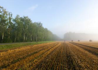 harvest cereals
