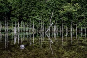 森と池と木々