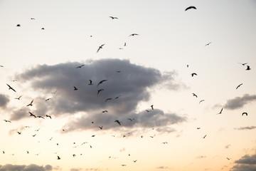 Flock of birds fly in  the sky