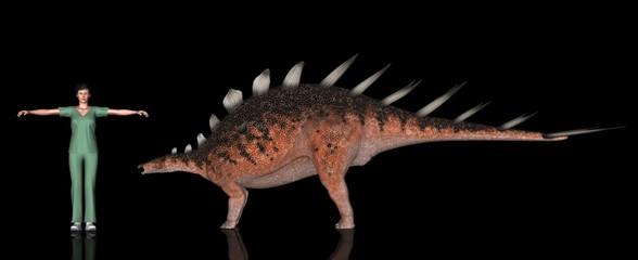 恐竜縮尺図・ケントロサウルス