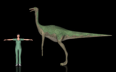 恐竜縮尺図・ガリミムス