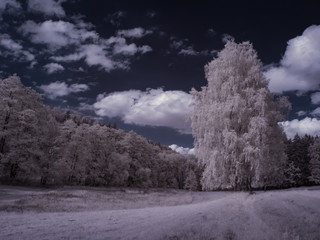 infrared photography - ir photo of a tree - the art of our world in the infrared spectrum