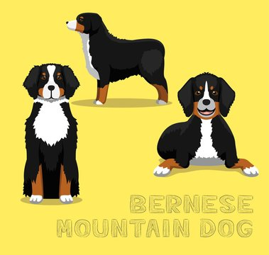Dog Bernese Mountain Dog Cartoon Vector Illustration