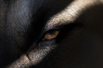 A Dogs Eye in the Shadows Looking Scary