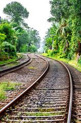 The old railway, going through the jungle in Sri Lanka.