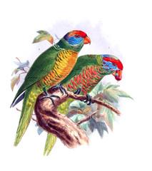 Illustration of bird