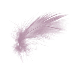 Beautiful violet - mauve mistkeys colors tone feather isolated on white background