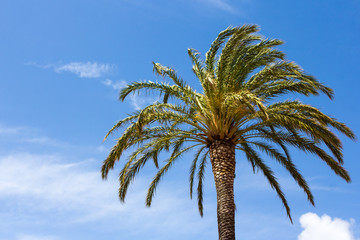 green palm tree over blue sky