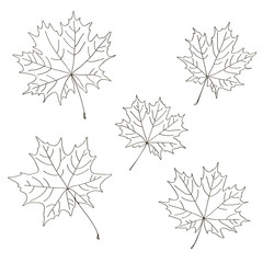 vector contour trees maple leaf botanical hand drawn sketch coloring book