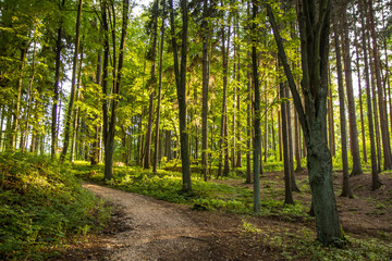 Forest green natural landscape view. Trees and path. Walk and relax. Peaceful, quiet, relaxing.
