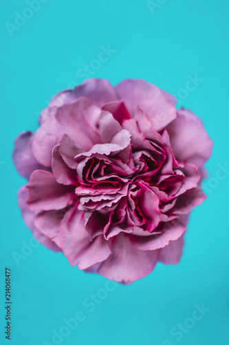 Spring Flowers Stock Photo And Royalty Free Images On Fotolia