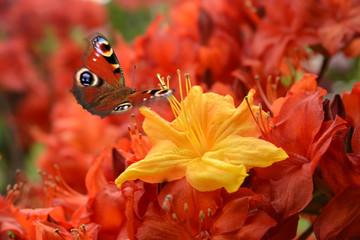 Schmetterling 499
