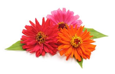 Bouquet of beautiful flowers.