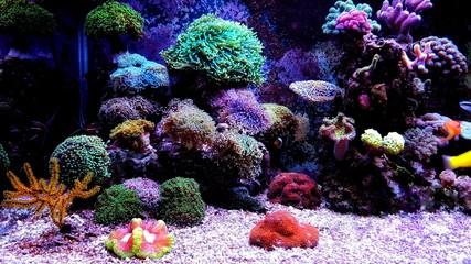 Saltwater dream coral reef aquarium tank scene