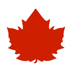 Red maple leaf, vector