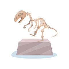 Dinosaur skeleton on gray stand. Ancient museum exhibit. Bones of prehistoric reptile. Flat vector for advertising poster or flyer