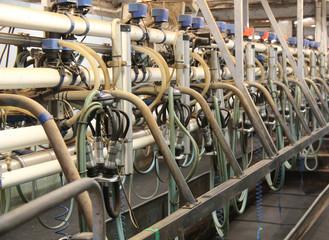 The Equipment in a Dairy Cow Farm Milking Parlour.