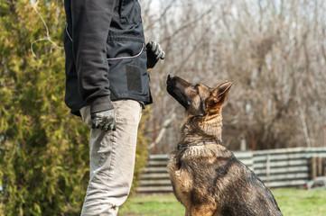 German shepherd puppy training at spring