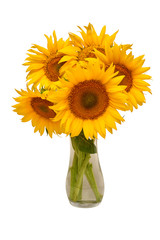 Creative still life idea flowers of sunflower bouquet in a glass vase. Isolated on white background. Floral arrangement. Picturesque and conceptual scene. Flat lay, top view