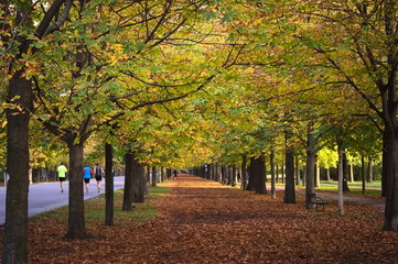 Tree-lined avenue in autumn with runners in background. Ground covered with leaves. Shot at Praterallee in Vienna, Austria.