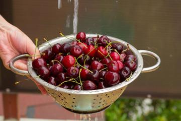 washing  cherries in the colander , fresh ripe plum crop