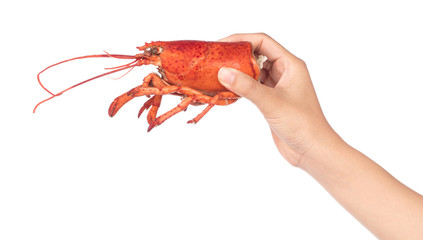 hand holding head of Shrimp Lobster isolated on white background