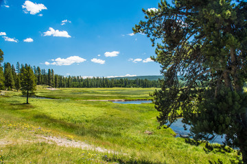 Meadow - Yellowstone National Park