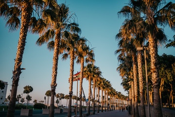 Evening palm trees with blue sky on the background in Valencia