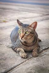Thai lovely cat.