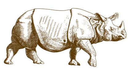 engraving drawing illustration of rhino
