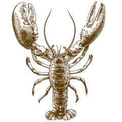 engraving drawing illustration of big lobster