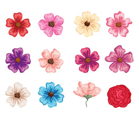 set beautiful flowers icons vector illustration design
