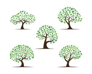 Logos of green Tree leaf root