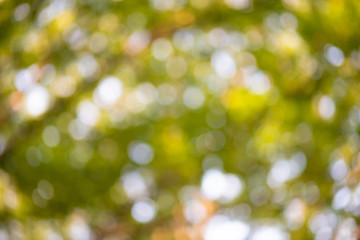 玉ボケ 背景 木漏れ日 葉