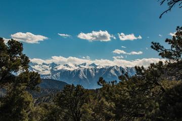 Sierra Nevadas and Pine Trees
