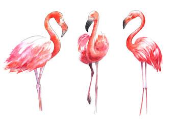 Foto op Aluminium Flamingo Watercolor painted bird. The greater flamingo in color.