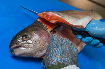 Cutting trout fillets on a fish farm, France