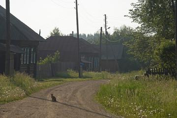 ANIMALS - the cat on the village street