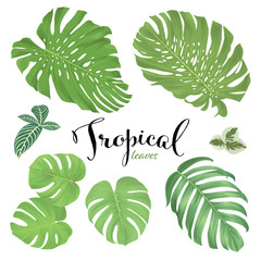 Monstera leaf and green tropical leaves on white background. Vector set of exotic tropical floral for wedding invitations and greeting card design.
