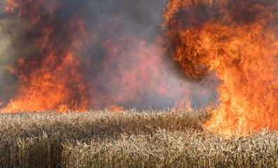 Feldbrand, brennendes Weizenfeld Fotoväggar
