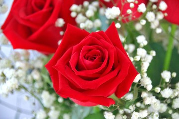 Red roses bouquet - close up