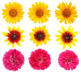 Your favorite summer flowers are sunflowers and roses.