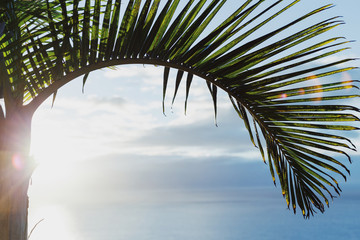 Palm tree on the sea background