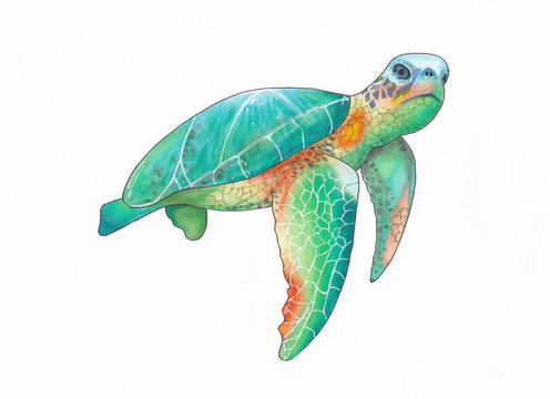 Illustration of a colorful sea turtle handdrawn sketch