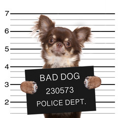 police mugshot dog