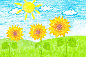 "Pencils drawing, colorful picture ""Sunflowers in the field"""