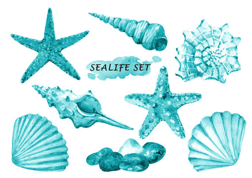 Watercolor set of sealife objects - seashells, starfish and stones. Hand drawn illustration isolated on white background.