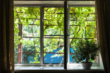 window in cottage with house plant