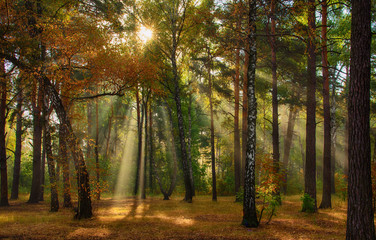 Walk in the autumn forest. Autumn colors. Sun rays.